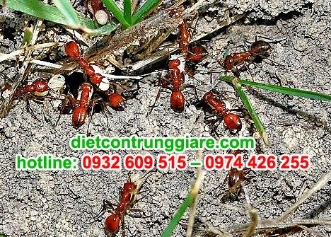 những thông tin thú vị về loài Kiến