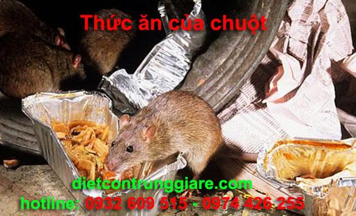 thức ăn của Chuột là gì