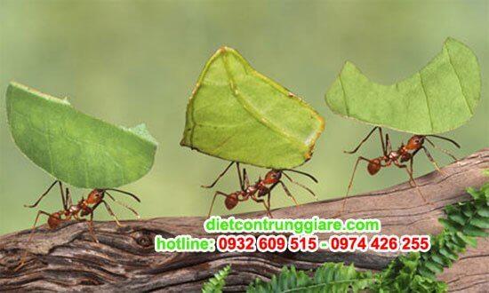 tìm hiểu về loài Kiến