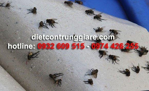 Các biện pháp xua đuổi và diệt ruồi an toàn