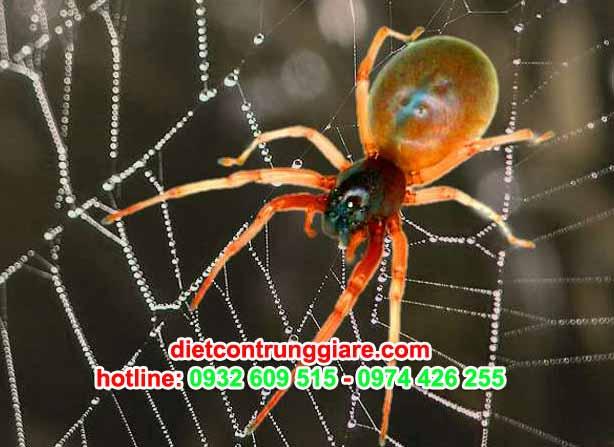 dịch vụ kiếm soát nhện tại nhà