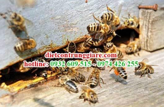 dịch vụ kiểm soát ong giá rẻ tại nhà