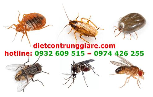 diệt côn trùng gây hại quận 10 giá rẻ