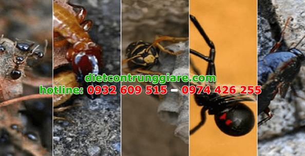 diệt côn trùng gây hại quận 11 giá rẻ