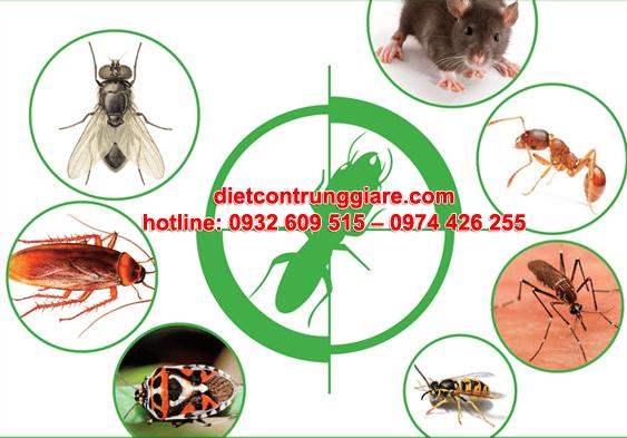 diệt côn trùng gây hại quận 5 giá rẻ