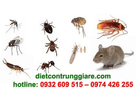 Diệt côn trùng gây hại quận 6 giá rẻ