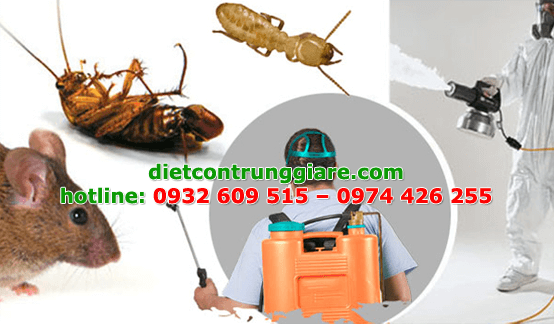 diệt côn trùng gây hại quận 7 giá rẻ