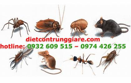 diệt côn trùng gây hại quận 8 giá rẻ