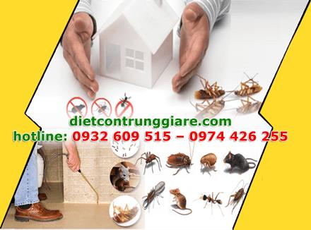diệt côn trùng gây hại quận 9 giá rẻ