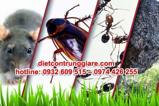 diệt côn trùng gây hại quận 1 giá rẻ