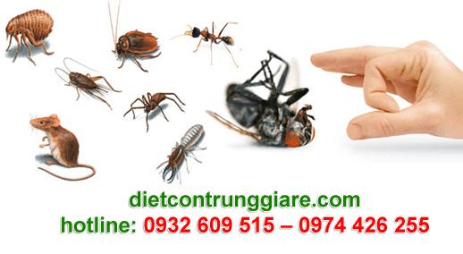 diệt côn trùng gây hại phú nhuận giá rẻ