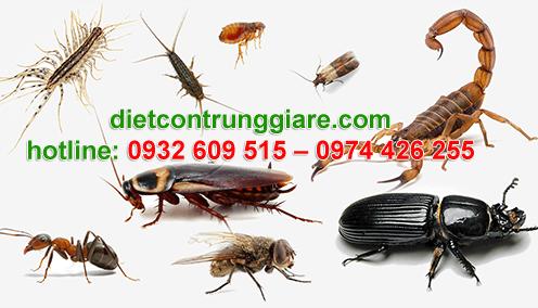 diệt côn trùng gây hại tân phú giá rẻ