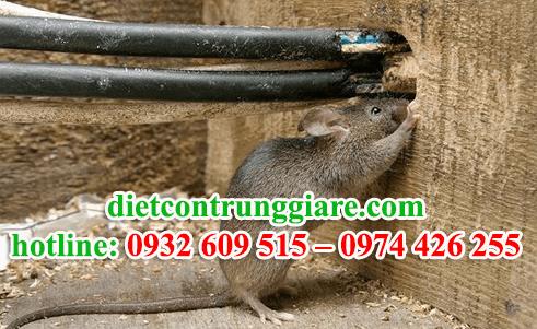 dịch vụ diệt chuột tại khu công nghiệp