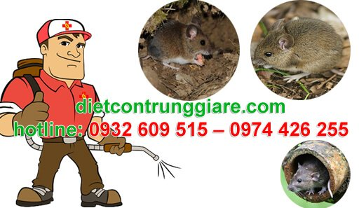 diệt chuột tại công ty - nhà xưởng giá rẻ