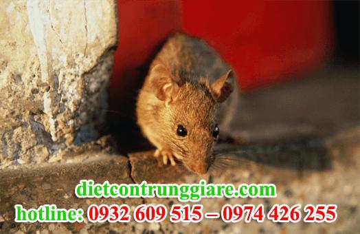 diệt chuột tại củ chi giá rẻ