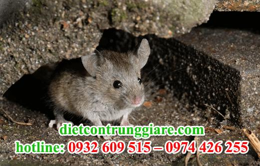 diệt chuột tại nhà bè giá rẻ