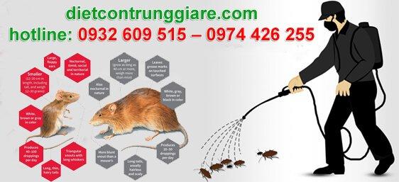 diệt chuột tại nhà chuyên nghiệp siêu rẻ