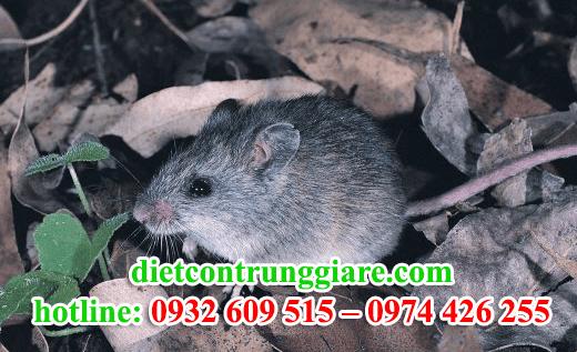 diệt chuột tại quận 1 giá rẻ