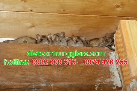 diệt chuột tại quận 11 giá rẻ