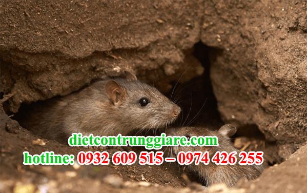 diệt chuột tại quận 12 giá rẻ