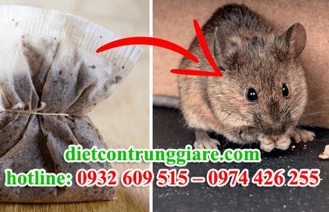 diệt chuột tại quận 2 giá rẻ
