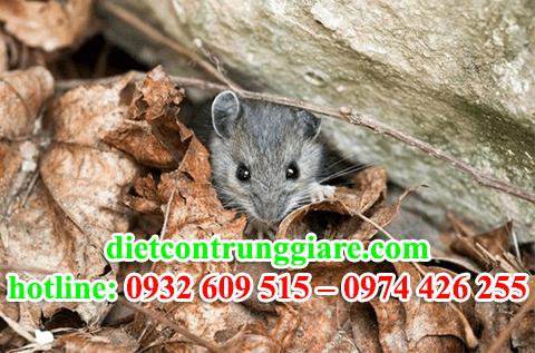 diệt chuột tại quận 3 giá rẻ