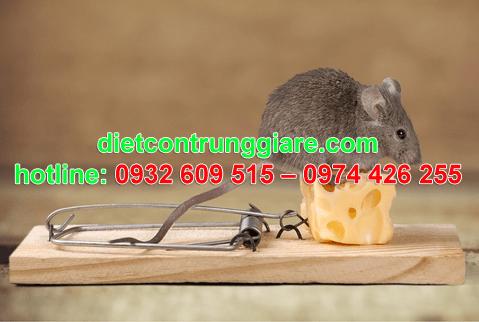 diệt chuột tại quận 4 giá rẻ