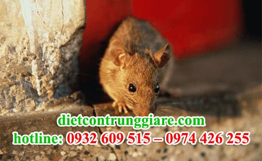 diệt chuột tại quận 5 giá rẻ