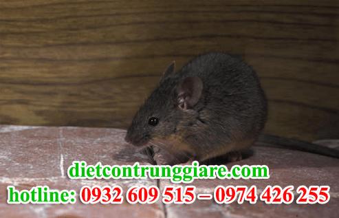 diệt chuột tại quận 7 giá rẻ