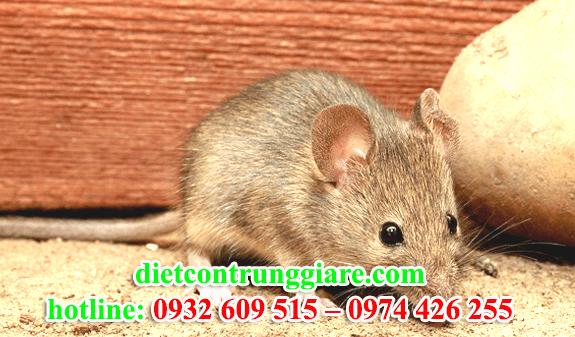 diệt chuột tại quận bình tân giá rẻ
