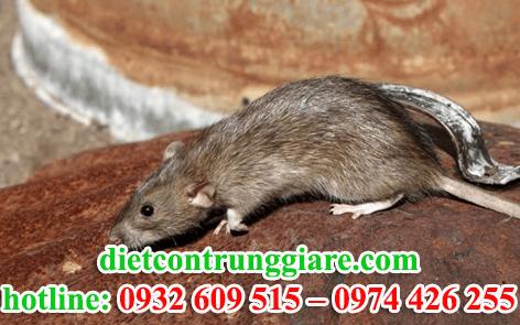 diệt chuột tại quận bình thạnh giá rẻ