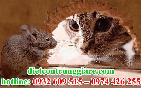 diệt chuột tại quận gò vấp giá rẻ