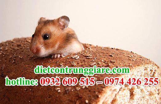 diệt chuột tại quận phú nhuận giá rẻ