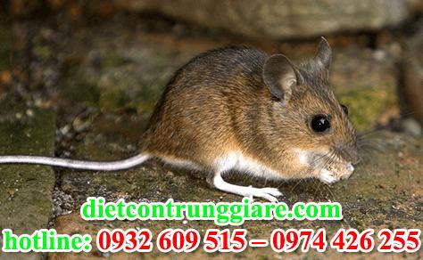 diệt chuột tại quận tân bình giá rẻ