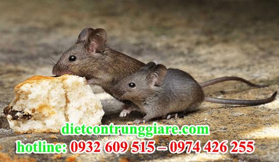 diệt chuột tại quận thủ đức giá rẻ
