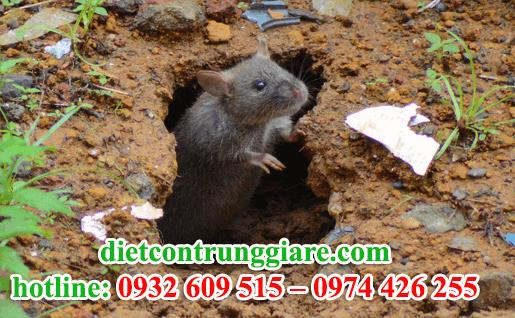 công ty diệt chuột tại tphcm giá rẻ