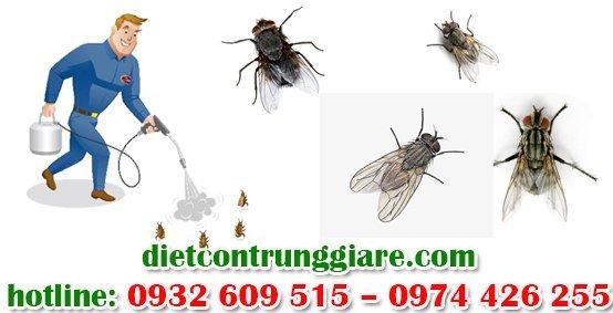 dịch vụ diệt ruồi chuyên nghiệp tại tphcm