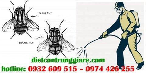 dịch vụ diệt ruồi giá rẻ tại tphcm