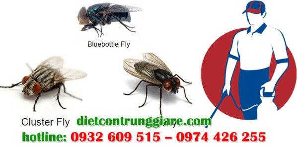 dịch vụ diệt ruồi tại bình chánh giá rẻ