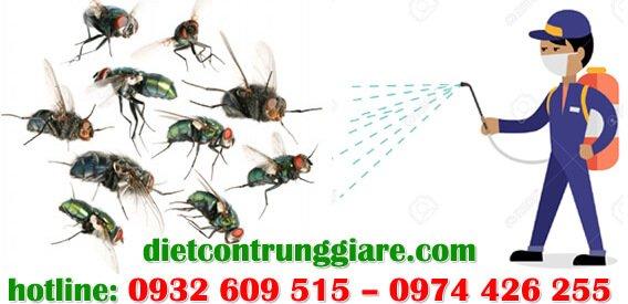 dịch vụ diệt ruồi tại hóc môn giá rẻ