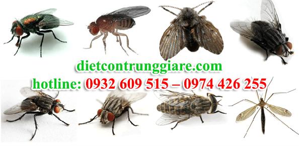 dịch vụ diệt ruồi tại quận 1 giá rẻ