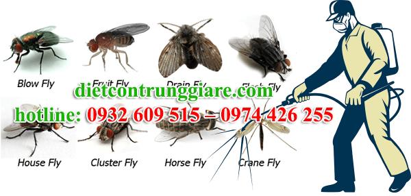 dịch vụ diệt ruồi tại quận 11 giá rẻ