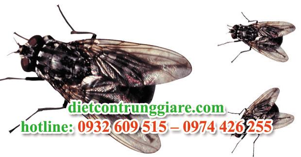 dịch vụ diệt ruồi tại quận 2 giá rẻ