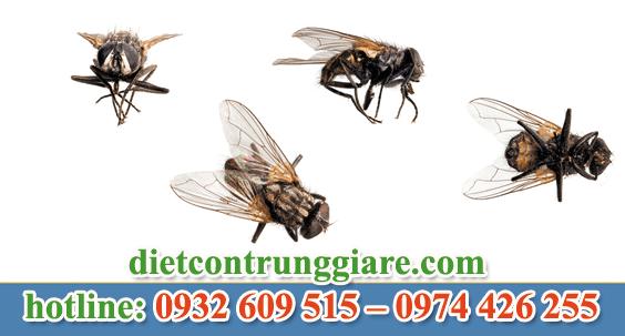 dịch vụ diệt ruồi tại quận 3 giá rẻ