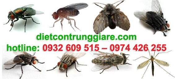 dịch vụ diệt ruồi tại quận 4 giá rẻ