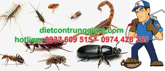 dịch vụ diệt ruồi tại quận 6 giá rẻ