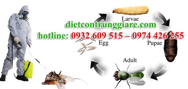 dịch vụ diệt ruồi tại quận 8 giá rẻ