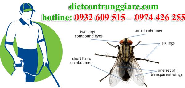 dịch vụ diệt ruồi tại quận 9 giá rẻ