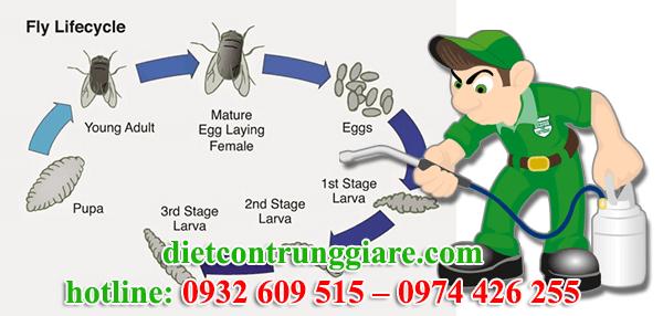 dịch vụ diệt ruồi tại quận bình tân giá rẻ