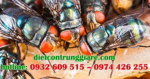 dịch vụ diệt ruồi tại quận bình thạnh giá rẻ